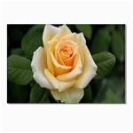 Yellow Rose Postcard 4  x 6