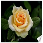 Yellow Rose Canvas 12  x 12
