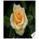 Yellow Rose Canvas 20  x 24