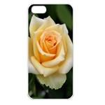 Yellow Rose Apple iPhone 5 Seamless Case (White)