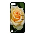 Yellow Rose Apple iPod Touch 5 Hardshell Case with Stand