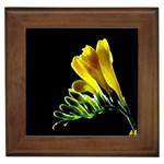Yellow Freesia Flower Framed Tile
