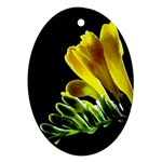 Yellow Freesia Flower Ornament (Oval)
