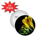 Yellow Freesia Flower 1.75  Button (10 pack)