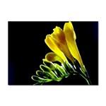 Yellow Freesia Flower Sticker A4 (10 pack)