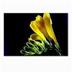 Yellow Freesia Flower Postcard 5  x 7