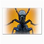 Animal Oil Beetle Postcards 5  x 7  (Pkg of 10)