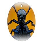 Animal Oil Beetle Oval Ornament (Two Sides)