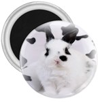 Animals Rabbits Brothers 3  Magnet