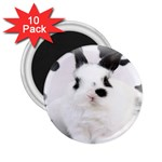 Animals Rabbits Brothers 2.25  Magnet (10 pack)