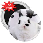 Animals Rabbits Brothers 3  Magnet (100 pack)