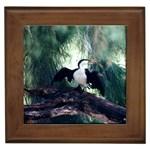 Cormorant Aussie bird Framed Tile