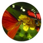 Butterfly Magnet 5  (Round)