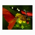 Butterfly Glasses Cloth (Small)