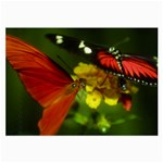 Butterfly Glasses Cloth (Large, Two Sides)