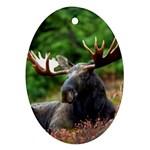 Majestic Moose Oval Ornament