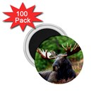 Majestic Moose 1.75  Button Magnet (100 pack)