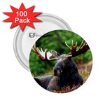 Majestic Moose 2.25  Button (100 pack)