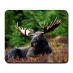 Majestic Moose Large Mouse Pad (Rectangle)