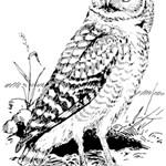 Animal Bird Forest Nature Owl Magic Photo Cubes