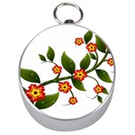 Flower Branch Nature Leaves Plant Silver Compasses