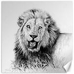 Lion Wildlife Art And Illustration Pencil Canvas 12  x 12