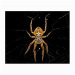 Insect Macro Spider Colombia Small Glasses Cloth