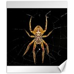 Insect Macro Spider Colombia Canvas 8  x 10