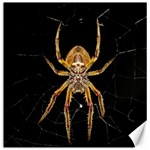 Insect Macro Spider Colombia Canvas 12  x 12