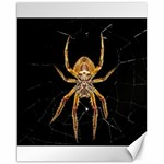Insect Macro Spider Colombia Canvas 16  x 20