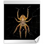 Insect Macro Spider Colombia Canvas 20  x 24