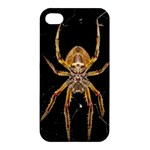 Insect Macro Spider Colombia Apple iPhone 4/4S Premium Hardshell Case