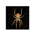 Insect Macro Spider Colombia Satin Bandana Scarf