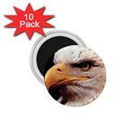 www_pics_am-birds133 1.75  Magnet (10 pack)