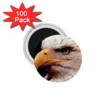 www_pics_am-birds133 1.75  Magnet (100 pack)