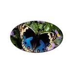butterfly_4 Sticker (Oval)