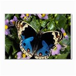 butterfly_4 Postcards 5  x 7  (Pkg of 10)