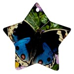 butterfly_4 Ornament (Star)