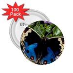 butterfly_4 2.25  Button (100 pack)