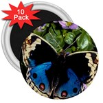 butterfly_4 3  Magnet (10 pack)
