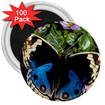 butterfly_4 3  Magnet (100 pack)