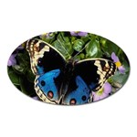 butterfly_4 Magnet (Oval)