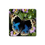 butterfly_4 Magnet (Square)