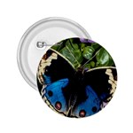 butterfly_4 2.25  Button