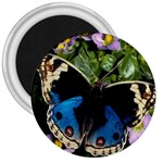 butterfly_4 3  Magnet