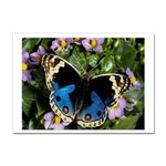 butterfly_4 Sticker A4 (10 pack)
