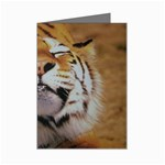 wallpaper_15015 Mini Greeting Cards (Pkg of 8)