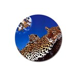 2-74-Animals-Wildlife-1024-007 Magnet 3  (Round)