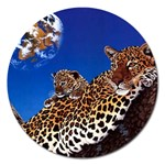 2-74-Animals-Wildlife-1024-007 Magnet 5  (Round)