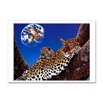 2-74-Animals-Wildlife-1024-007 Sticker A4 (10 pack)